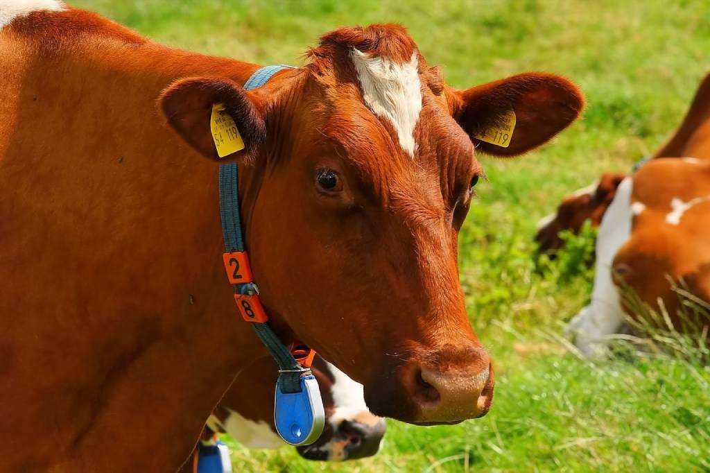 молочні ферми